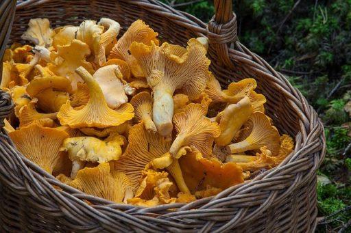 Skogsmuffins med kantareller och timjan